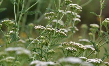 Hinweise, Ideen und Unterstützung zur Planung des eigenen Naturgartens in fünf Schritten.