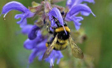 Eine Auswahl an heimischen Wildstauden für Garten, Terrasse und Balkon zur Förderung der Insektenvielfalt.