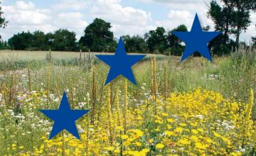 Hinweise zur Anlage und Pflege mehrjähriger Blühstreifen und Blühflächen mit gebietseigenen Wildpflanzenarten.