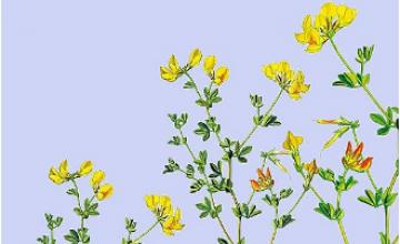 """Hinweise, Ideen und Unterstützung zur Umsetzung des eigenen Wildpflanzenbalkons vom Projekt """"Tausende Arten - Tausende Gärten""""."""