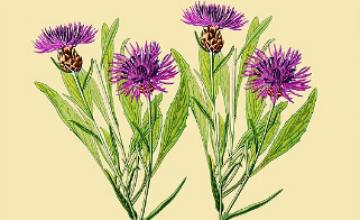"""In diesem Merkblatt von """"Tausende Gärten - Tausende Arten"""" finden Sie Hinweise, Ideen zur Planung und Anlage von Staudenbeeten."""